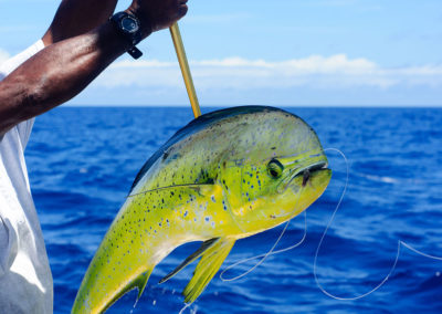 Fresh-Caught-Mahi-pfocl